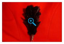 Hackle - Royal Ulster Rifles - Black