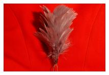 Hackle - Royal Inniskilling Fusiliers - Grey